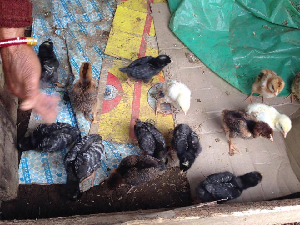 Yangward Foundation | Poultry Farming